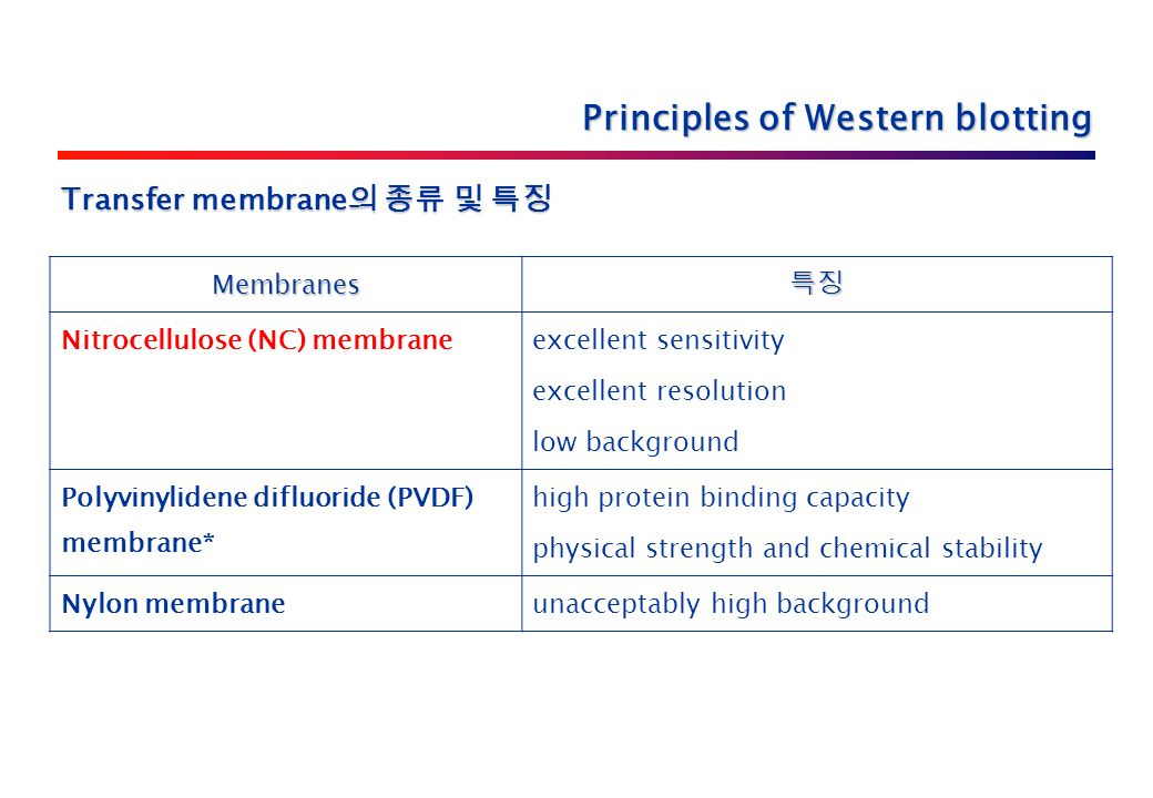 Principles of Western blotting Membranes 특징 Nitrocellulose (NC) membrane excellent sensitivity excellent resolution low background Polyvinylidene difluoride (PVDF) membrane* high protein binding capacity physical strength and chemical stability Nylon membraneunacceptably high background Transfer membrane 의 종류 및 특징