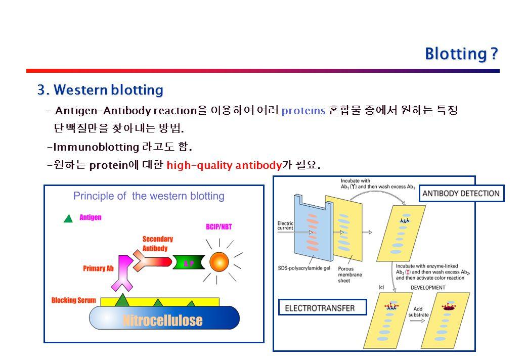 3. Western blotting - Antigen-Antibody reaction 을 이용하여 여러 proteins 혼합물 중에서 원하는 특정 단백질만을 찾아내는 방법.