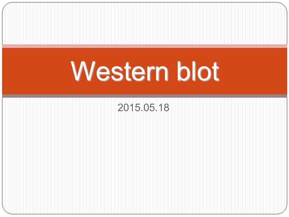 2015.05.18 Western blot
