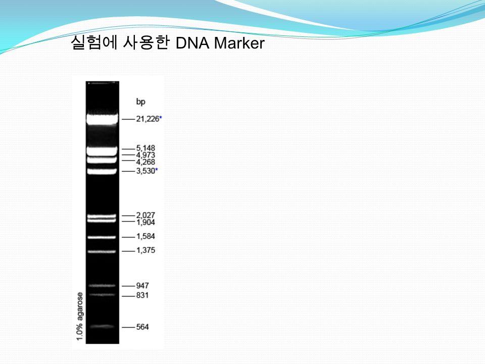 실험에 사용한 DNA Marker