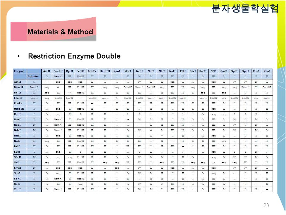 23 분자생물학실험 Materials & Method Restriction Enzyme Double