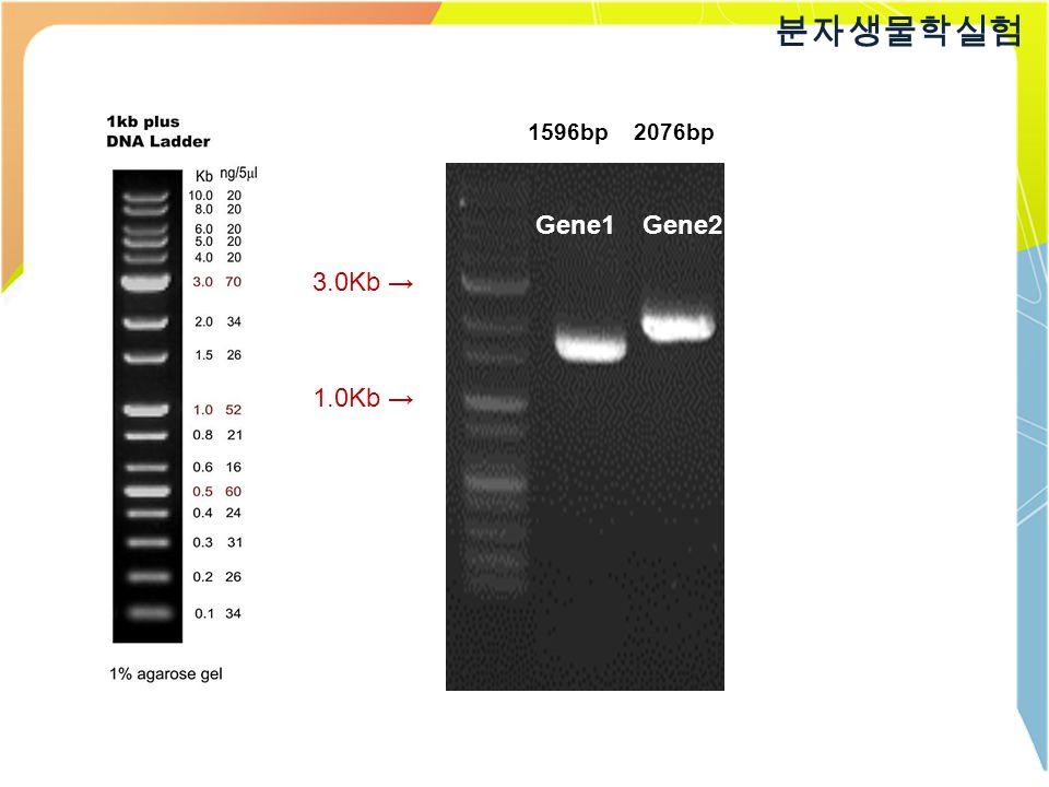 3.0Kb → 1.0Kb → 1596bp2076bp Gene2Gene1