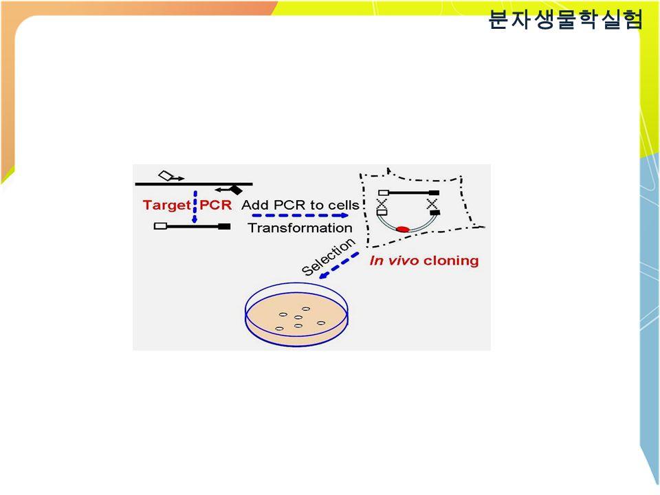 분자생물학실험