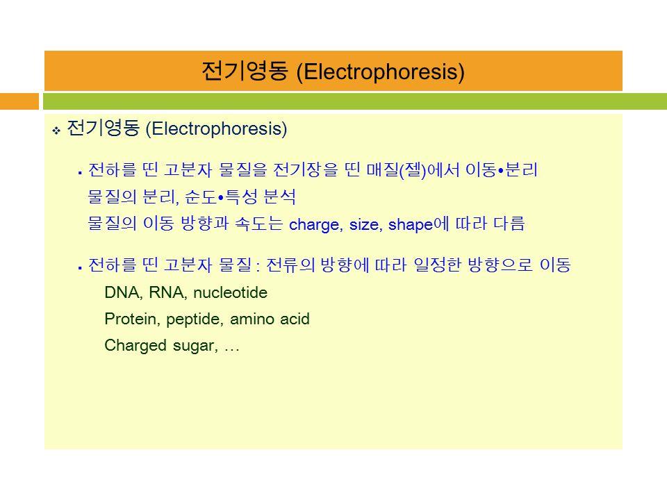 전기영동 (Electrophoresis)  전기영동 (Electrophoresis)  전하를 띤 고분자 물질을 전기장을 띤 매질 ( 젤 ) 에서 이동 ∙ 분리 물질의 분리, 순도 ∙ 특성 분석 물질의 이동 방향과 속도는 charge, size, shape 에 따라 다름  전하를 띤 고분자 물질 : 전류의 방향에 따라 일정한 방향으로 이동 DNA, RNA, nucleotide Protein, peptide, amino acid Charged sugar, …
