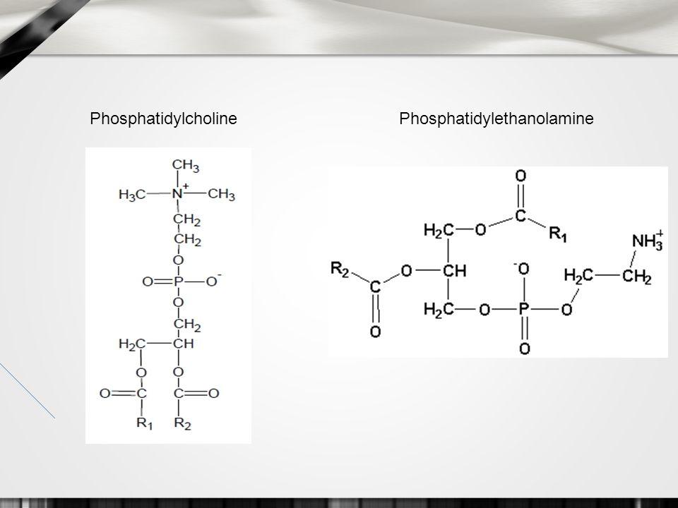 PhosphatidylcholinePhosphatidylethanolamine