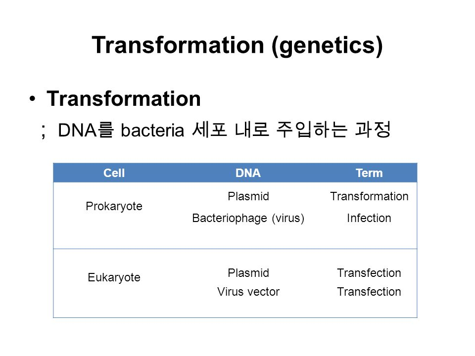 Transformation (genetics) Transformation ; DNA 를 bacteria 세포 내로 주입하는 과정 CellDNATerm Prokaryote Plasmid Bacteriophage (virus) Transformation Infection Eukaryote Plasmid Virus vector Transfection