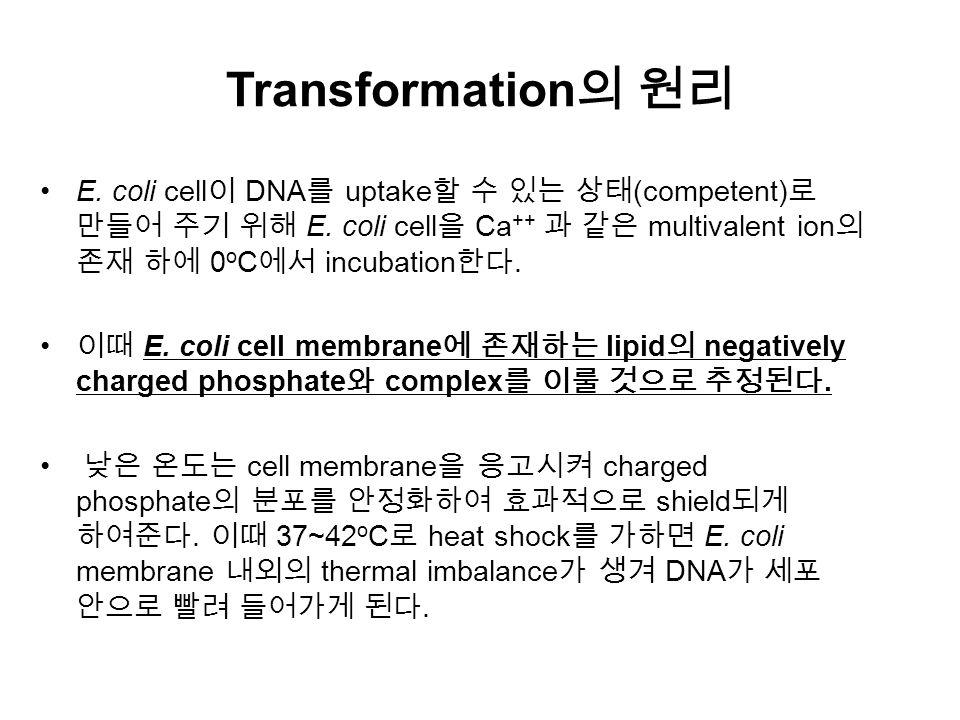 Transformation 의 원리 E. coli cell 이 DNA 를 uptake 할 수 있는 상태 (competent) 로 만들어 주기 위해 E.