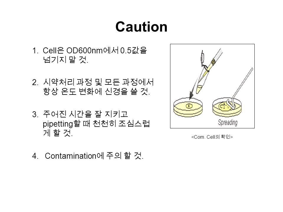 Caution  Cell 은 OD600nm 에서 0.5 값을 넘기지 말 것.  시약처리 과정 및 모든 과정에서 항상 온도 변화에 신경을 쓸 것.