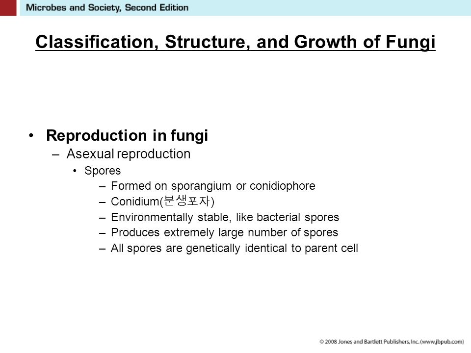 Classification, Structure, and Growth of Fungi Reproduction in fungi –Asexual reproduction Spores –Formed on sporangium or conidiophore –Conidium( 분생포자 ) –Environmentally stable, like bacterial spores –Produces extremely large number of spores –All spores are genetically identical to parent cell