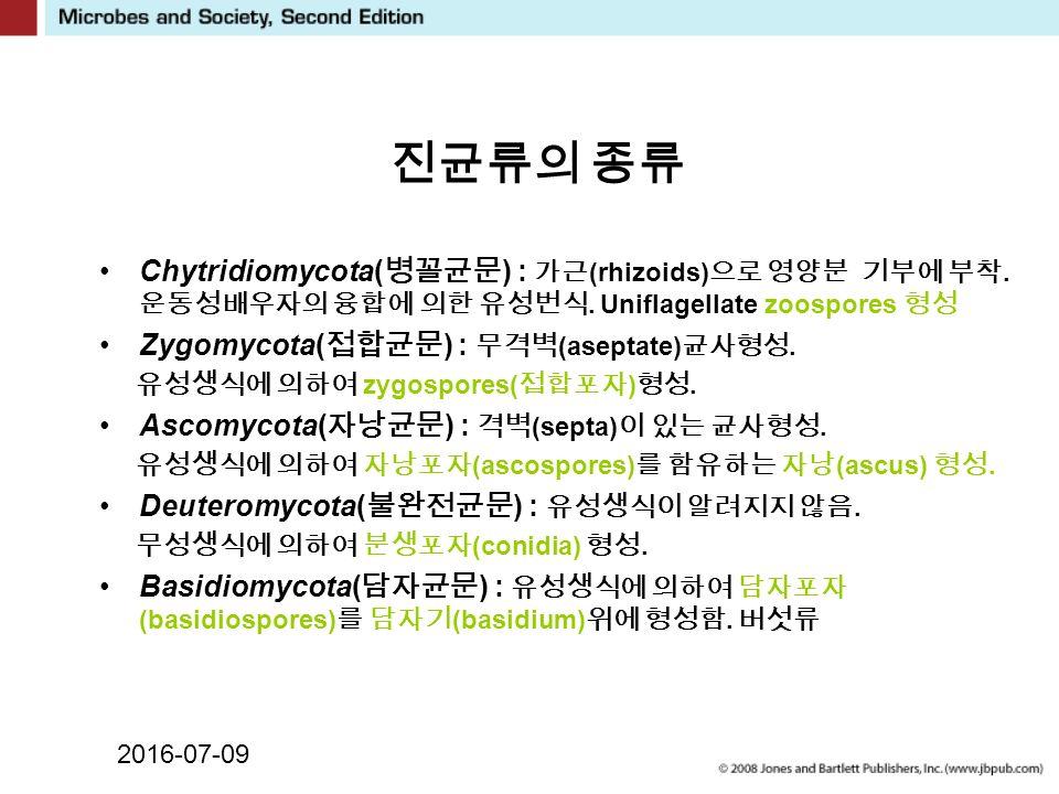 2016-07-09 진균류의 종류 Chytridiomycota( 병꼴균문 ) : 가근 (rhizoids) 으로 영양분 기부에 부착.