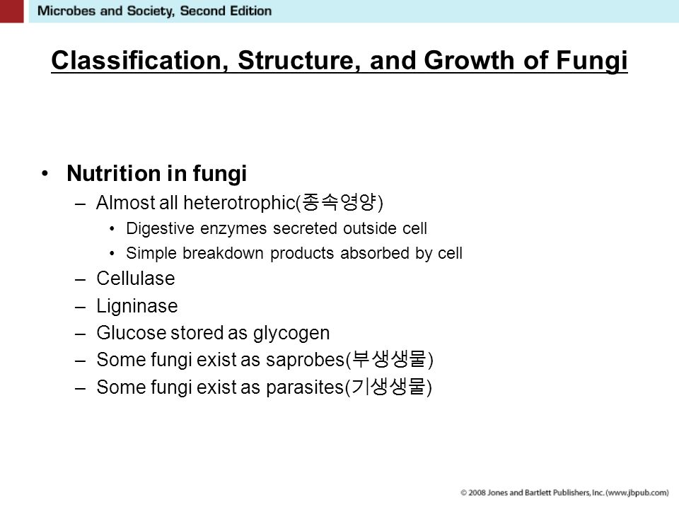 Classification, Structure, and Growth of Fungi Nutrition in fungi –Almost all heterotrophic( 종속영양 ) Digestive enzymes secreted outside cell Simple breakdown products absorbed by cell –Cellulase –Ligninase –Glucose stored as glycogen –Some fungi exist as saprobes( 부생생물 ) –Some fungi exist as parasites( 기생생물 )