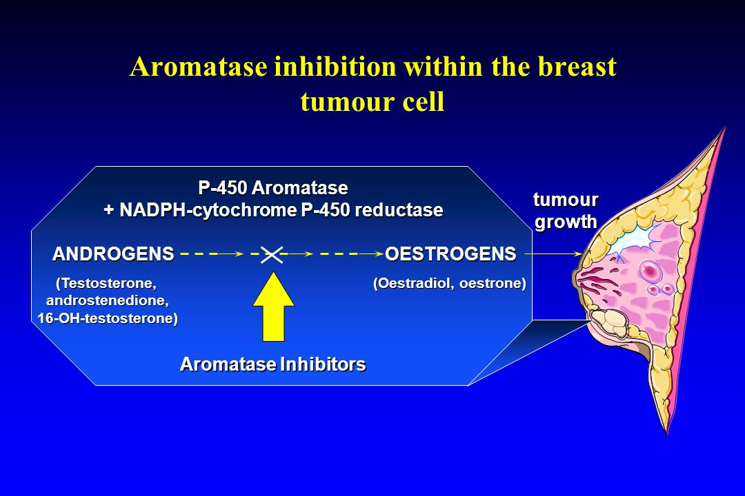 Aromatase inhibition within the breast tumour cell ANDROGENS OESTROGENS P-450 Aromatase + NADPH-cytochrome P-450 reductase (Testosterone, androstenedione, 16-OH-testosterone) (Oestradiol, oestrone) Aromatase Inhibitors tumourgrowth