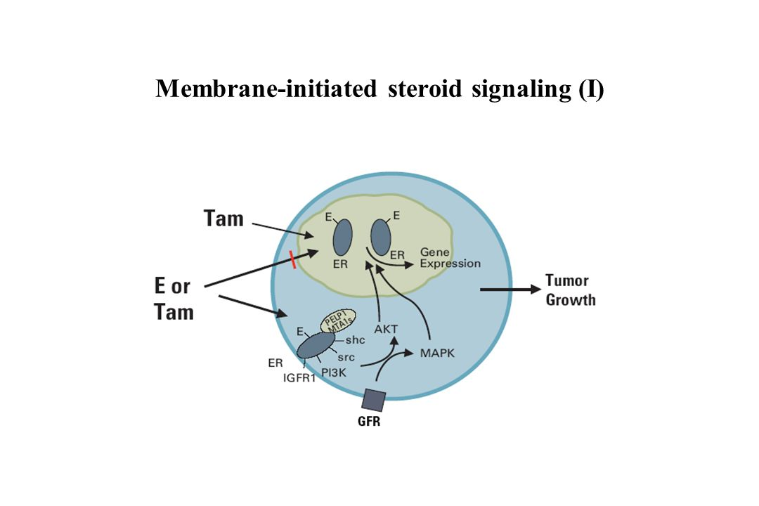 Membrane-initiated steroid signaling (I)