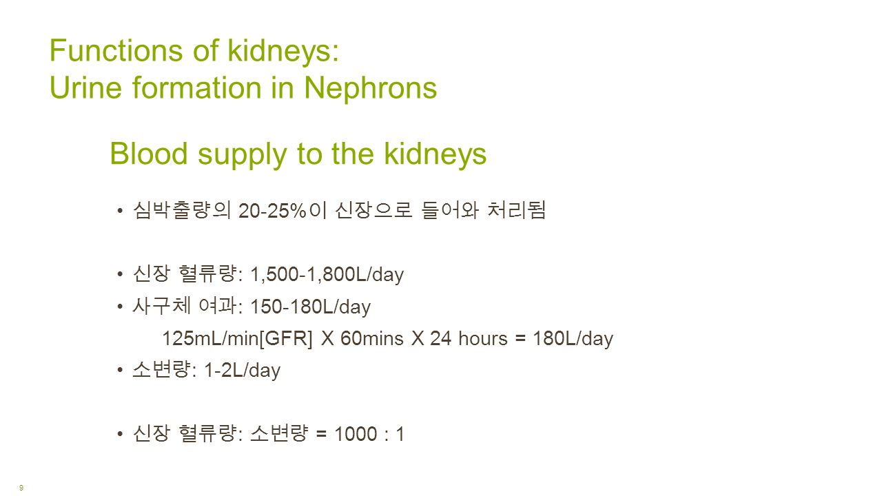 Blood supply to the kidneys 심박출량의 20-25% 이 신장으로 들어와 처리됨 신장 혈류량 : 1,500-1,800L/day 사구체 여과 : L/day 125mL/min[GFR] X 60mins X 24 hours = 180L/day 소변량 : 1-2L/day 신장 혈류량 : 소변량 = 1000 : 1 Functions of kidneys: Urine formation in Nephrons 9