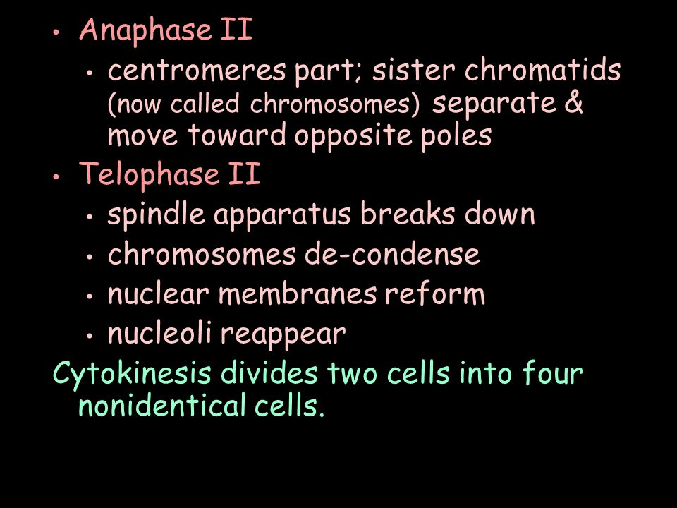 Anaphase II centromeres part; sister chromatids (now called chromosomes) separate & move toward opposite poles Telophase II spindle apparatus breaks down chromosomes de-condense nuclear membranes reform nucleoli reappear Cytokinesis divides two cells into four nonidentical cells.