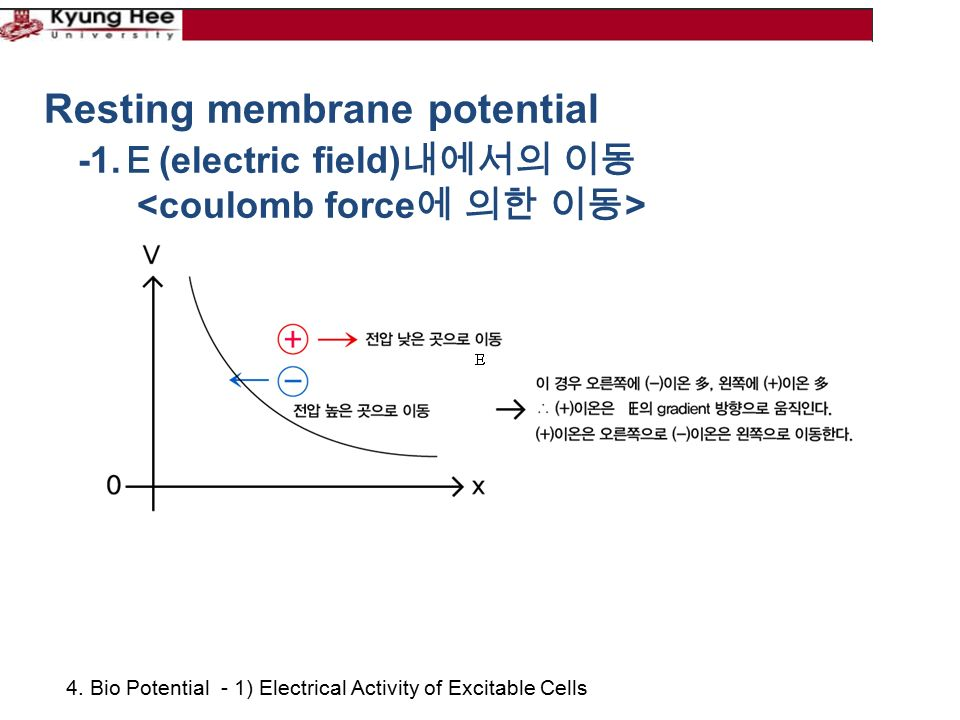 4. Bio Potential - 1) Electrical Activity of Excitable Cells Resting membrane potential -1.