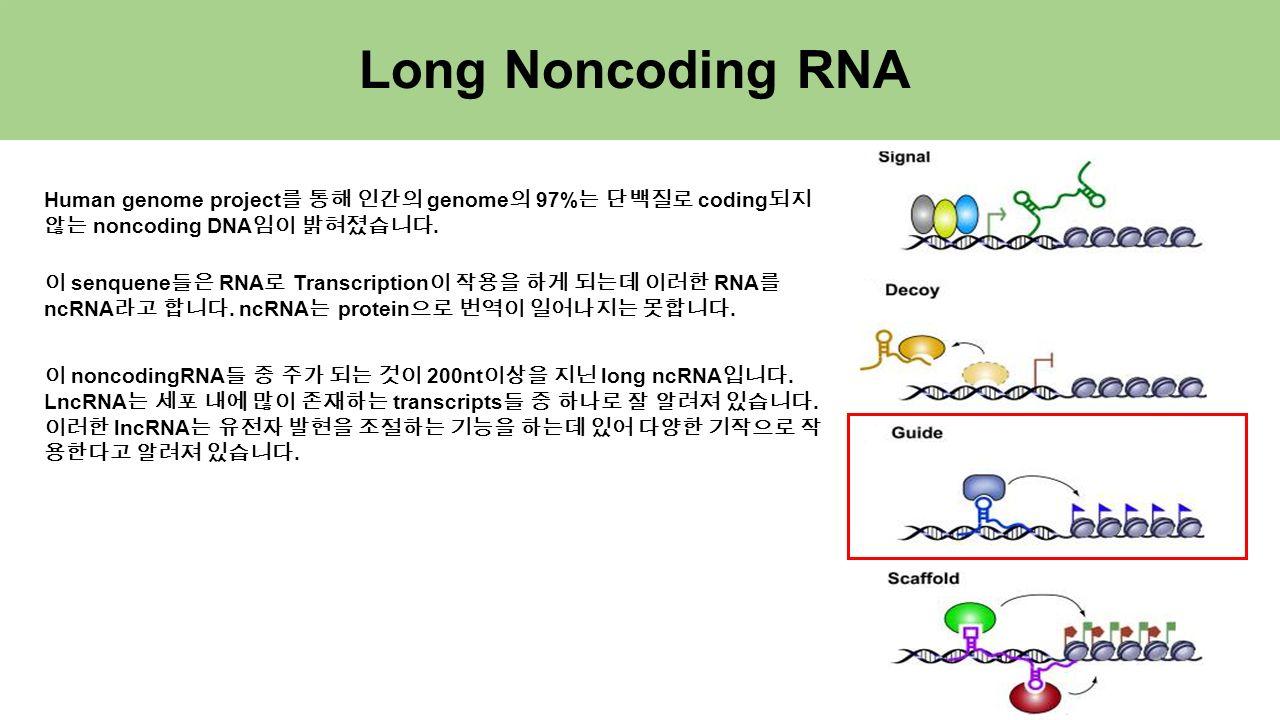 Long Noncoding RNA Human genome project 를 통해 인간의 genome 의 97% 는 단백질로 coding 되지 않는 noncoding DNA 임이 밝혀졌습니다.