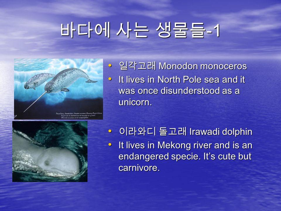 바다에 사는 생물들 -1 일각고래 Monodon monoceros 일각고래 Monodon monoceros It lives in North Pole sea and it was once disunderstood as a unicorn.