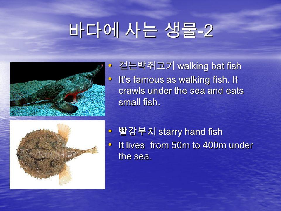 바다에 사는 생물 -2 걷는박쥐고기 walking bat fish 걷는박쥐고기 walking bat fish It's famous as walking fish.