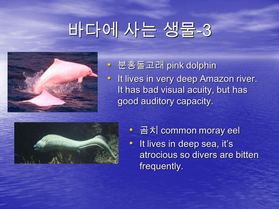 바다에 사는 생물 -3 분홍돌고래 pink dolphin 분홍돌고래 pink dolphin It lives in very deep Amazon river.