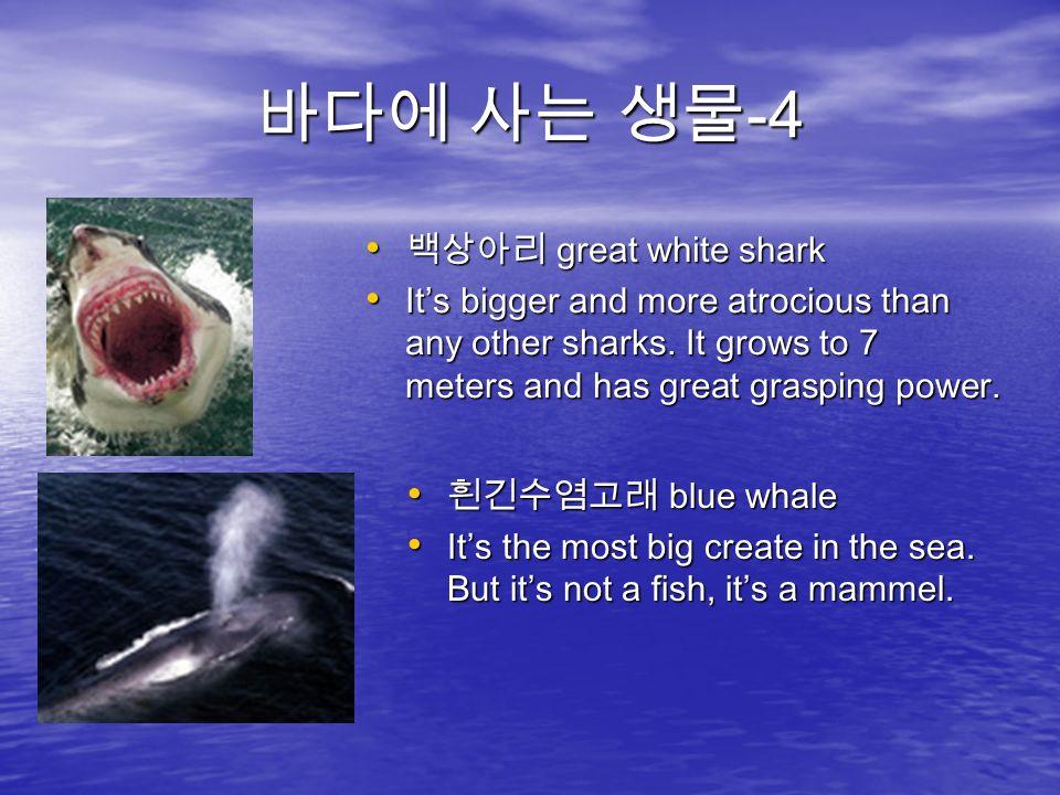 바다에 사는 생물 -4 백상아리 great white shark 백상아리 great white shark It's bigger and more atrocious than any other sharks.
