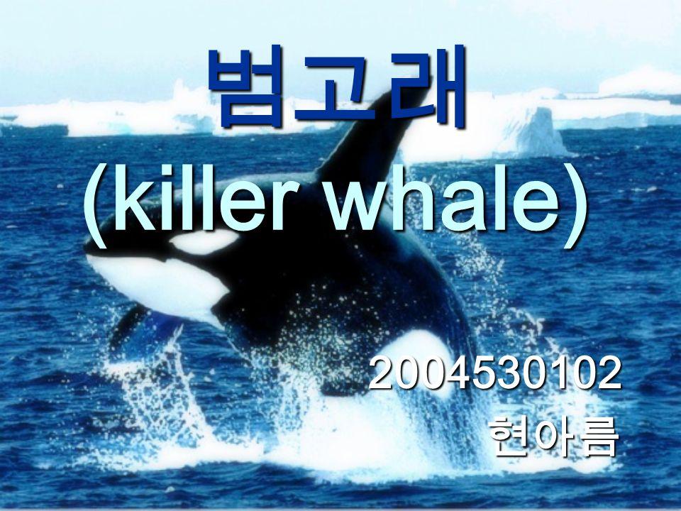 범고래 (killer whale) 2004530102현아름