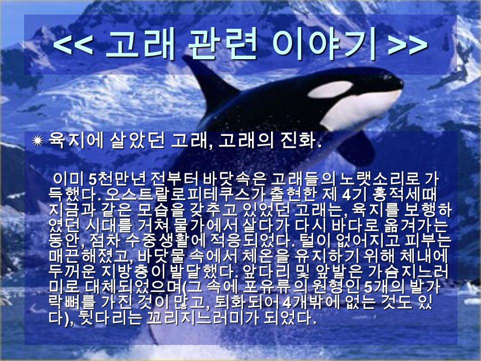 > >  육지에 살았던 고래, 고래의 진화.  육지에 살았던 고래, 고래의 진화. 이미 5 천만년 전부터 바닷속은 고래들의 노랫소리로 가 득했다.