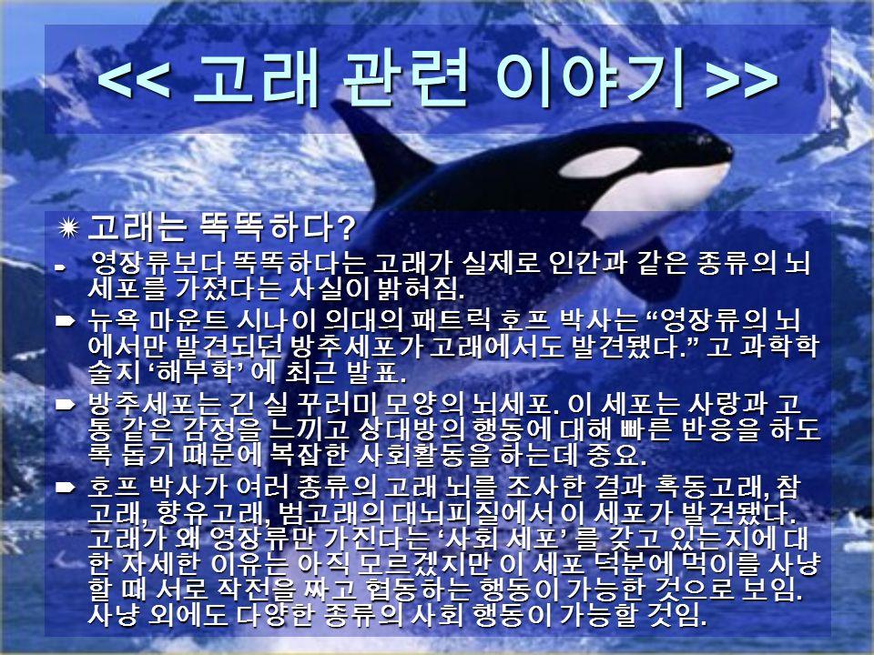 > >  고래는 똑똑하다 .  영장류보다 똑똑하다는 고래가 실제로 인간과 같은 종류의 뇌 세포를 가졌다는 사실이 밝혀짐.