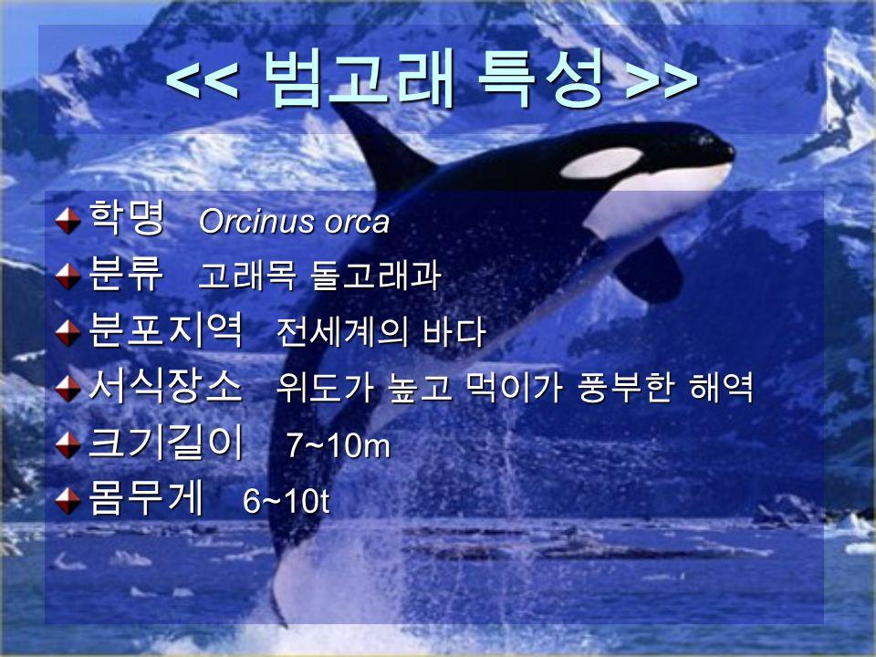 > > 학명 Orcinus orca 분류 고래목 돌고래과 분포지역 전세계의 바다 서식장소 위도가 높고 먹이가 풍부한 해역 크기길이 7~10m 몸무게 6~10t