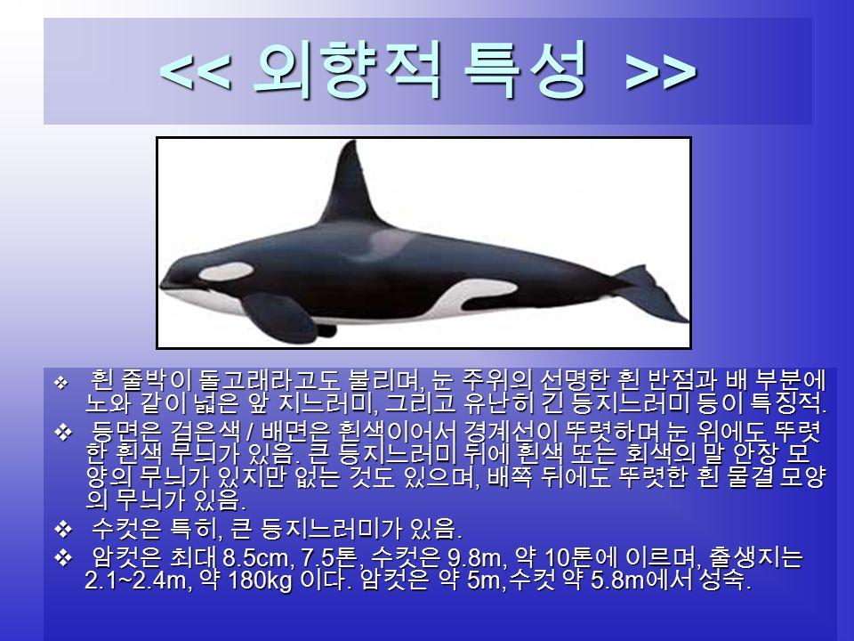 > >  흰 줄박이 돌고래라고도 불리며, 눈 주위의 선명한 흰 반점과 배 부분에 노와 같이 넓은 앞 지느러미, 그리고 유난히 긴 등지느러미 등이 특징적.
