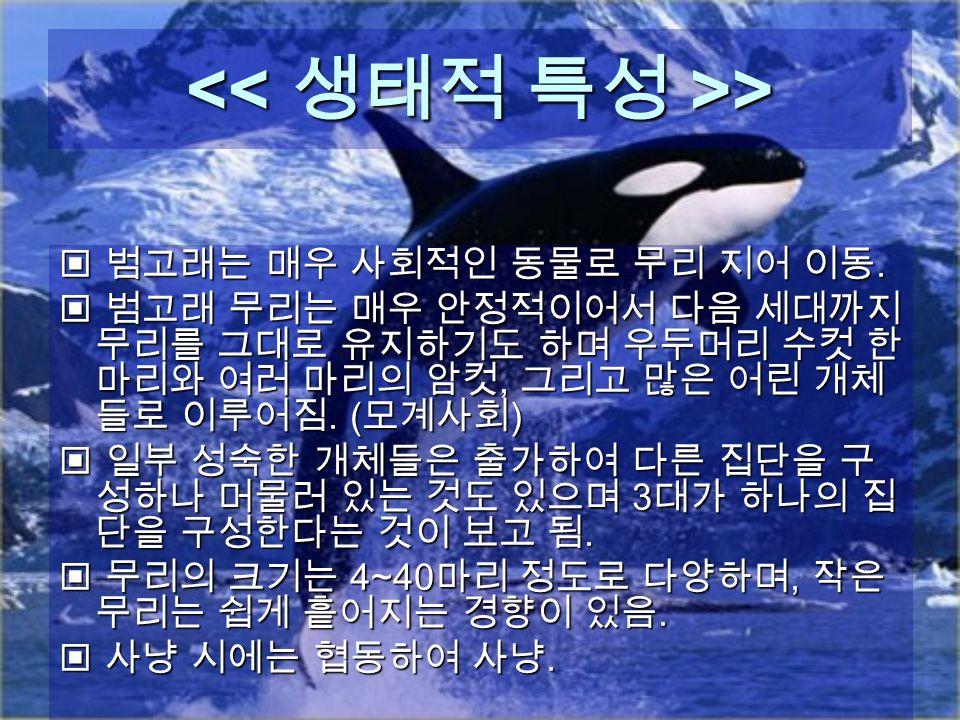> > 범고래는 매우 사회적인 동물로 무리 지어 이동. 범고래는 매우 사회적인 동물로 무리 지어 이동.