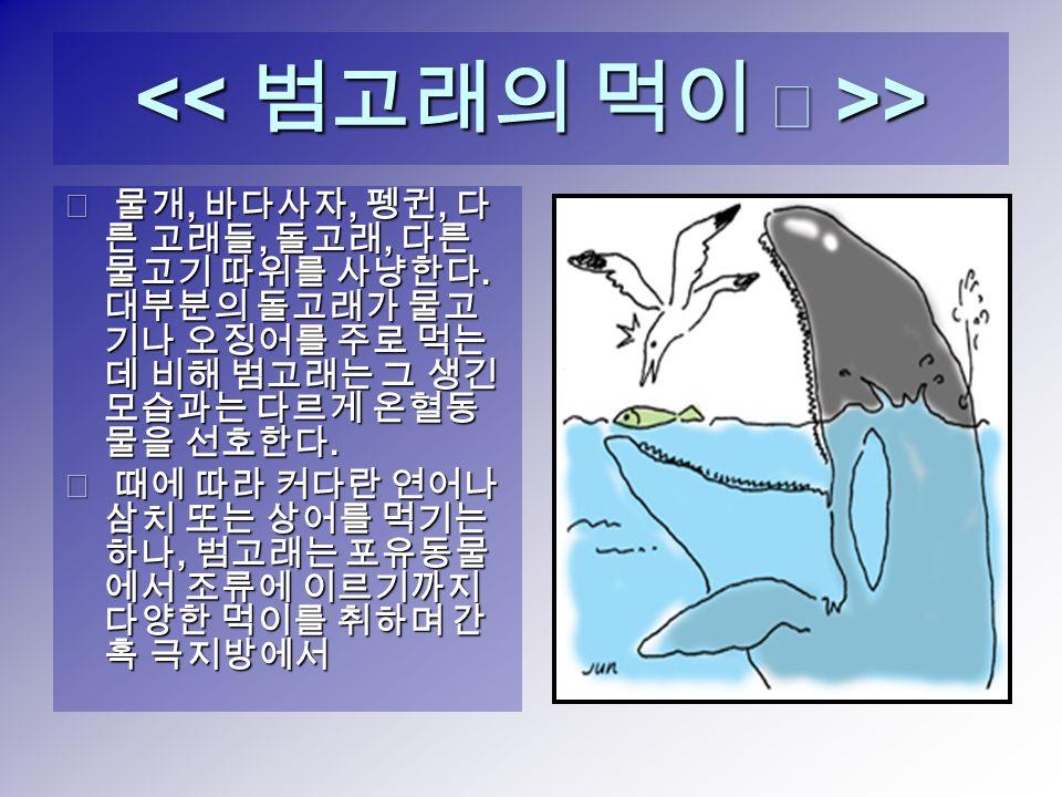 > > ◈ 물개, 바다사자, 펭귄, 다 른 고래들, 돌고래, 다른 물고기 따위를 사냥한다.