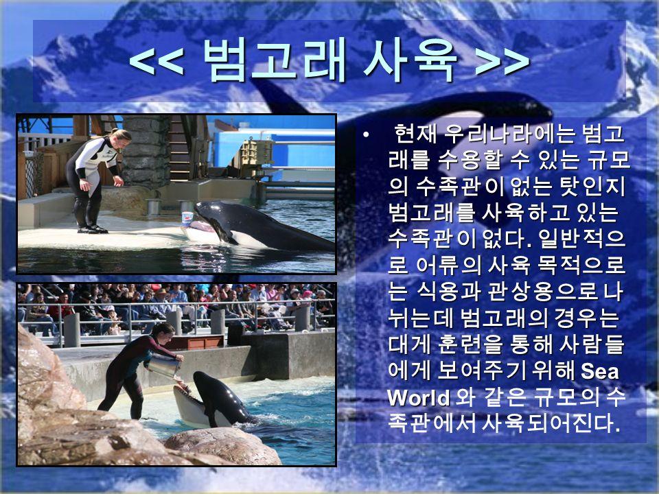 > > 현재 우리나라에는 범고 래를 수용할 수 있는 규모 의 수족관이 없는 탓인지 범고래를 사육하고 있는 수족관이 없다.