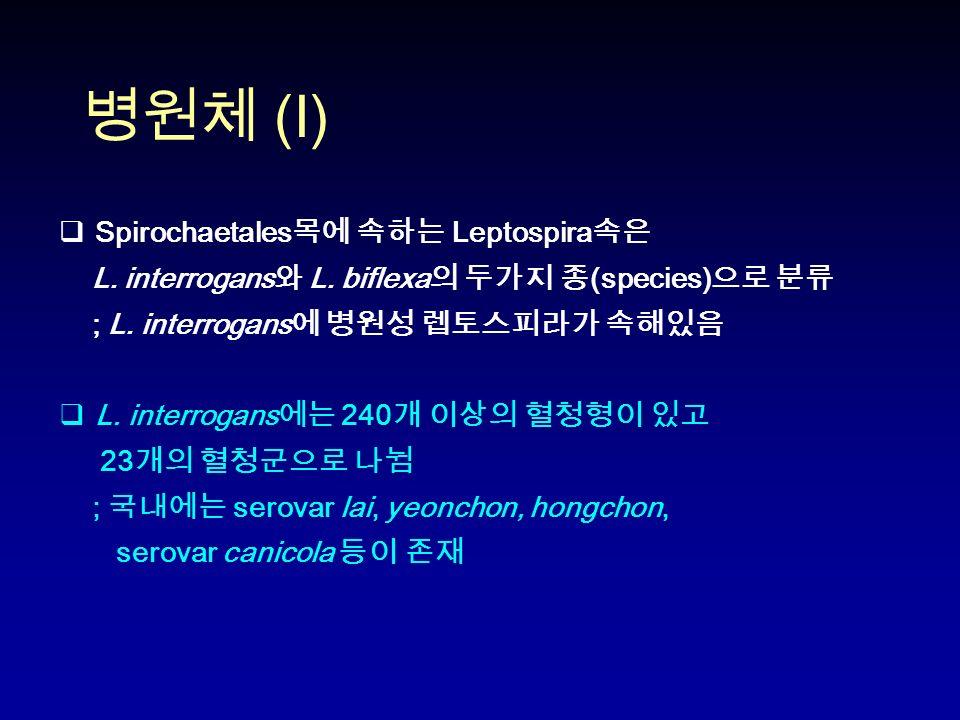 병원체 (I)  Spirochaetales 목에 속하는 Leptospira 속은 L. interrogans 와 L.