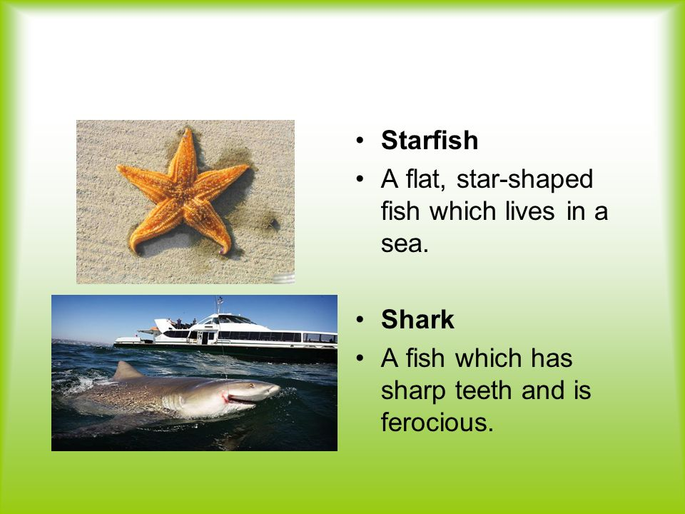 Starfish A flat, star-shaped fish which lives in a sea.
