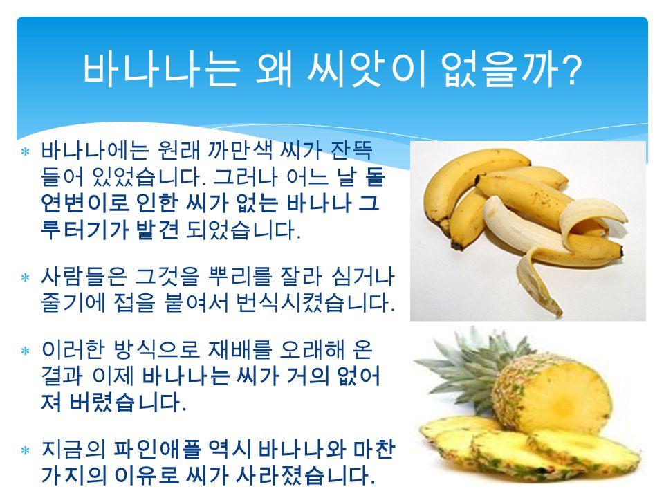  바나나에는 원래 까만색 씨가 잔뜩 들어 있었습니다. 그러나 어느 날 돌 연변이로 인한 씨가 없는 바나나 그 루터기가 발견 되었습니다.