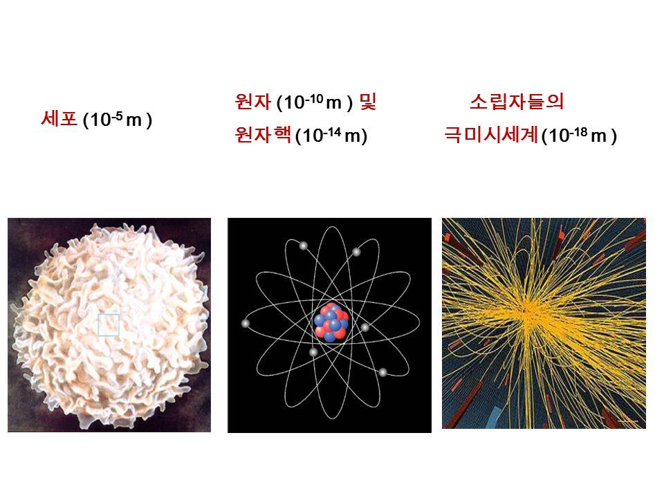 원자 (10 -10 m ) 및 원자핵 (10 -14 m) 소립자들의 극미시세계 (10 -18 m ) 세포 (10 -5 m )