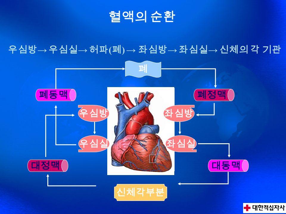 생명의 기본 원리 폐포모세혈관조직 O2O2 CO 2 O2O2 노력성 폐활량 – 최대한 공기를 들이 마시고, 최대한 토해 낸 양 남자성인 – 3,000 ~ 4,000cc, 여자성인 – 2,000 ~ 3,000cc 페포의 표면적 폐의 용적 - 전폐기량 (TLC) : 6000cc = 폐활량 + 잔기량 환기량 - 1 회 흡기 또는 호기로 인한 변화율 – 500cc 1 초율 – 1 초량 / 노력성폐활량 70% 이상이면 정상 호흡은 성인의 경우 1 분간 약 17 회 하는데 건강, 연령, 운동 등의 조건에 따라 1 분간 12 ~ 20 회까지의 차이가 생긴다.