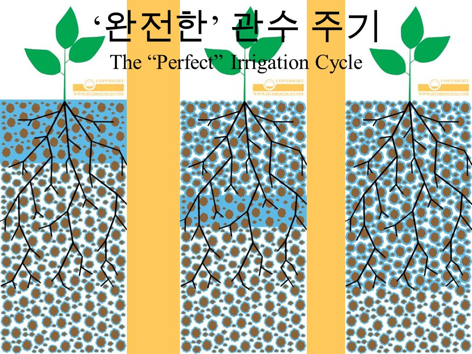 ' 완전한 ' 관수 주기 The Perfect Irrigation Cycle
