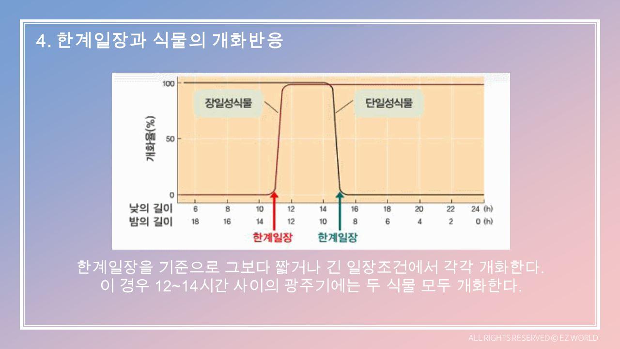 한계일장을 기준으로 그보다 짧거나 긴 일장조건에서 각각 개화한다. 이 경우 12~14 시간 사이의 광주기에는 두 식물 모두 개화한다.