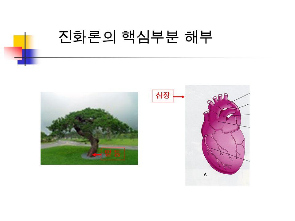 밑 둥밑 둥 심장 진화론의 핵심부분 해부