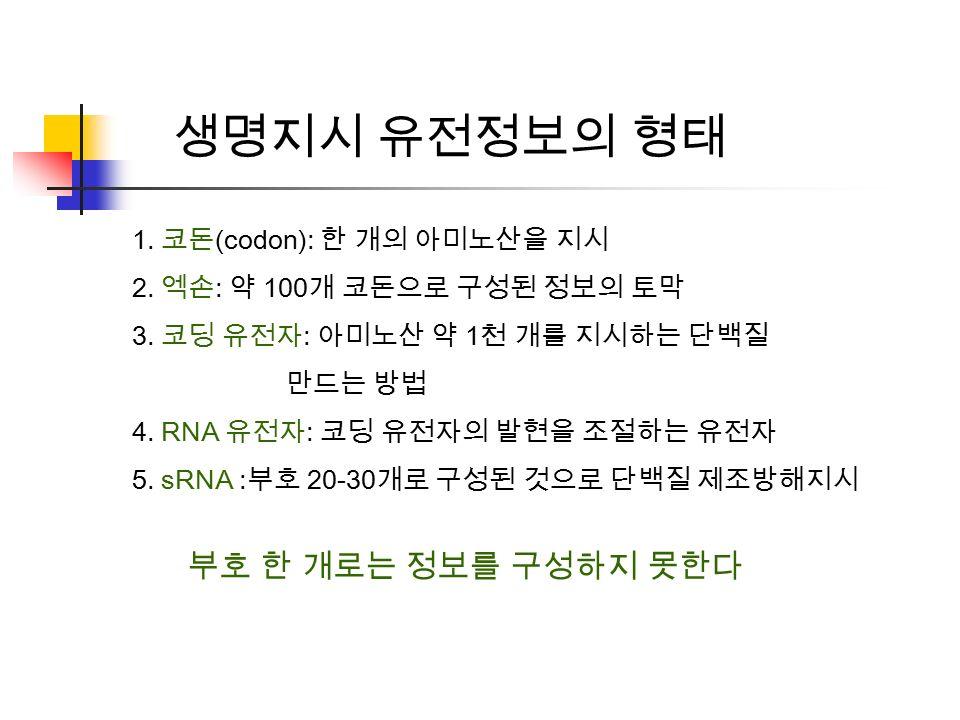 생명지시 유전정보의 형태 1. 코돈 (codon): 한 개의 아미노산을 지시 2. 엑손 : 약 100 개 코돈으로 구성된 정보의 토막 3.