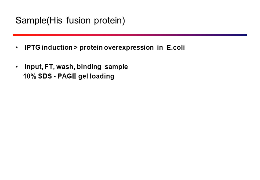 Sample(His fusion protein) IPTG induction > protein overexpression in E.coli Input, FT, wash, binding sample 10% SDS - PAGE gel loading