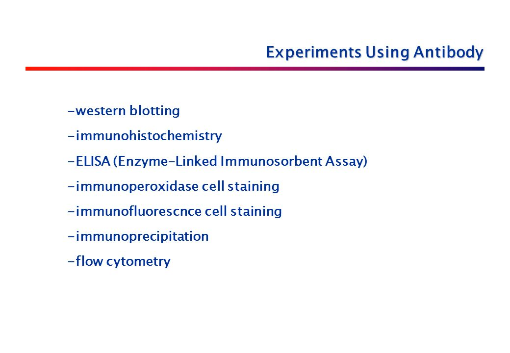 -western blotting -immunohistochemistry -ELISA (Enzyme-Linked Immunosorbent Assay) -immunoperoxidase cell staining -immunofluorescnce cell staining -immunoprecipitation -flow cytometry Experiments Using Antibody