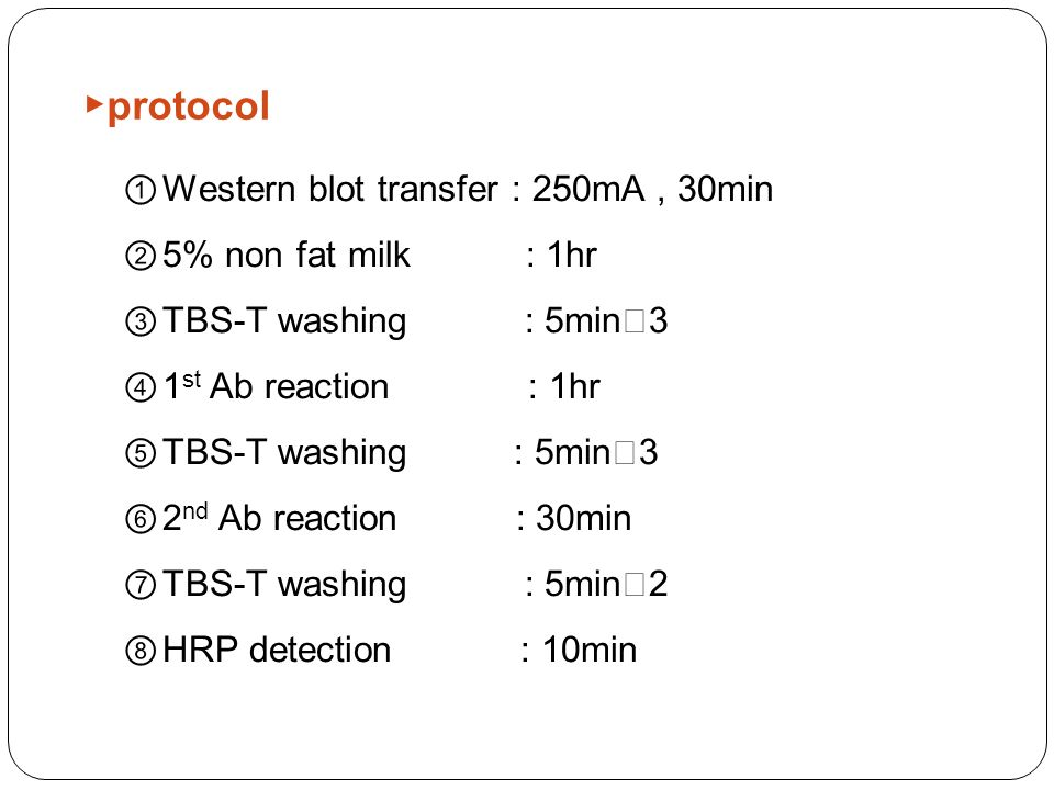 ▶ protocol ① Western blot transfer : 250mA, 30min ② 5% non fat milk : 1hr ③ TBS-T washing : 5min Ⅹ 3 ④ 1 st Ab reaction : 1hr ⑤ TBS-T washing : 5min Ⅹ 3 ⑥ 2 nd Ab reaction : 30min ⑦ TBS-T washing : 5min Ⅹ 2 ⑧ HRP detection : 10min