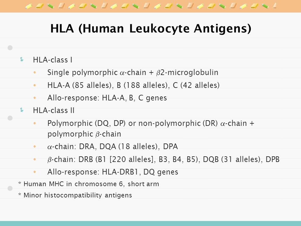 HLA (Human Leukocyte Antigens)  HLA-class I  Single polymorphic  -chain +  2-microglobulin  HLA-A (85 alleles), B (188 alleles), C (42 alleles)  Allo-response: HLA-A, B, C genes  HLA-class II  Polymorphic (DQ, DP) or non-polymorphic (DR)  -chain + polymorphic  -chain   -chain: DRA, DQA (18 alleles), DPA   -chain: DRB (B1 [220 alleles], B3, B4, B5), DQB (31 alleles), DPB  Allo-response: HLA-DRB1, DQ genes * Human MHC in chromosome 6, short arm * Minor histocompatibility antigens