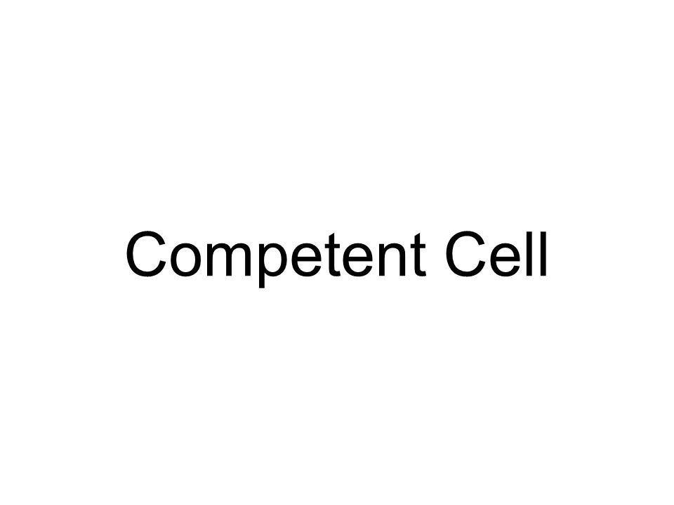 Competent Cell