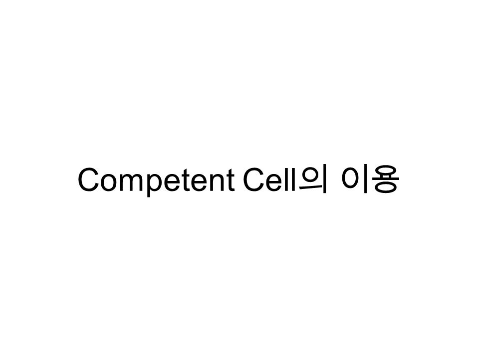 Competent Cell 의 이용
