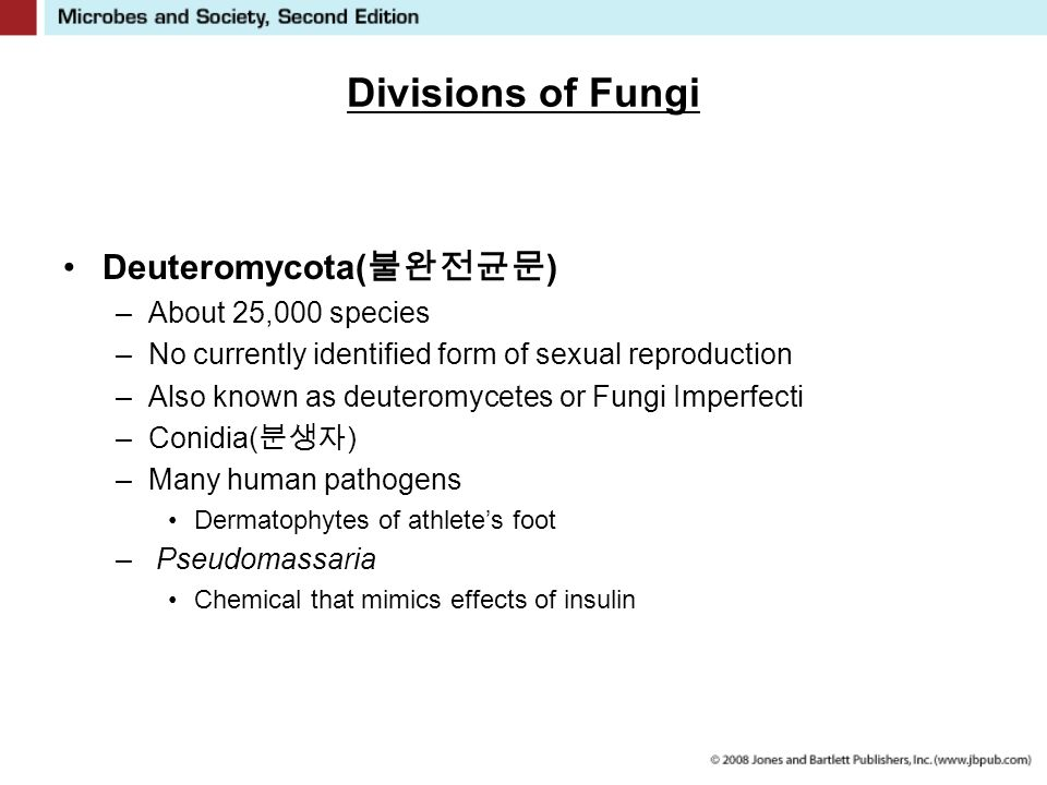 Divisions of Fungi Deuteromycota( 불완전균문 ) –About 25,000 species –No currently identified form of sexual reproduction –Also known as deuteromycetes or Fungi Imperfecti –Conidia( 분생자 ) –Many human pathogens Dermatophytes of athlete's foot – Pseudomassaria Chemical that mimics effects of insulin