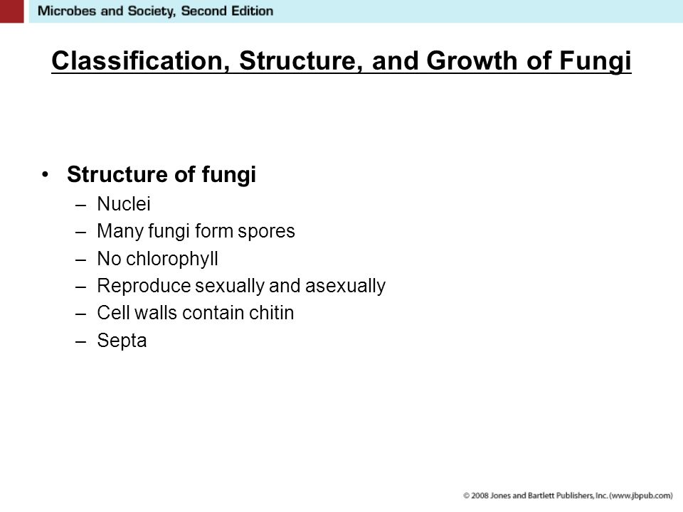 Classification, Structure, and Growth of Fungi Structure of fungi –Nuclei –Many fungi form spores –No chlorophyll –Reproduce sexually and asexually –Cell walls contain chitin –Septa